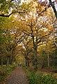 Autumn - Efterår i Kongelunden - panoramio.jpg