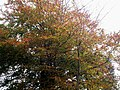 Autumn Colours at Mountain Chapel Llanteg - geograph.org.uk - 1599634.jpg