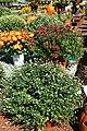 Autumn Display at Garden Shop - 50494728898.jpg