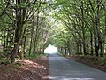 Avenue of trees - geograph.org.uk - 821287.jpg