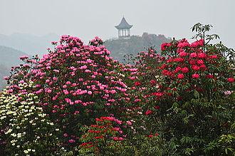 Dafang County - Image: Azaleas Area