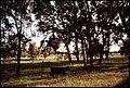 BLACK ANGUS CATTLE AT RANCH - NARA - 542628.jpg