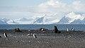 Baily Head, Deception Island (33415084558).jpg