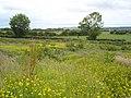 Ballyleckan near Bushmills - geograph.org.uk - 858924.jpg
