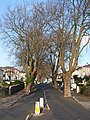 Bampfylde Road Torquay - geograph.org.uk - 1101403.jpg