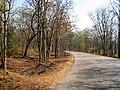 Bandipur Tiger Reserve - panoramio (15).jpg