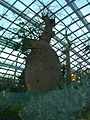 Baobab and Bottle Tree Garden, Flower Dome, Gardens by the Bay, Singapore - 20140513-02.jpg