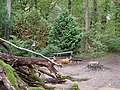 Barrier in the Hambach forest 15.jpg