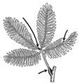 Base - botany (PSF).png