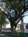 BatangasCityjf8624 07.JPG