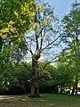 Baum ist holl - panoramio.jpg