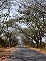 Beehives on road Karnataka 0676 01.jpg