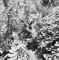 Beeld van hert, pal achter het hoofdgebouw - Gulpen - 20332644 - RCE.jpg