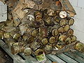 Beelitz Heilstätten -jha- 226247651735.jpeg