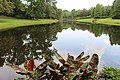 Bellingrath Gardens and Home 2018 Mirror Lake 01.jpg