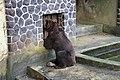Beruang (Bear).jpg