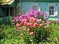 Beryozovka, Bryanskaya oblast', Russia, 242524 - panoramio (12).jpg