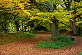 Beverley Westwood IMG 7806 - panoramio.jpg