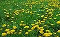 Bienvenu printemps - panoramio.jpg