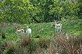 Billsmoor Park - geograph.org.uk - 826312.jpg