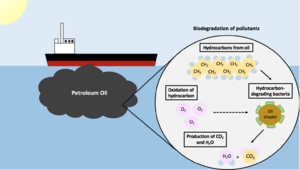 Microbial biodegradation - Image: Biodegradation of Pollutants