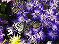 Biopark-butterflies0803.jpg