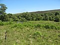 Birchwoods, Strath Carron - geograph.org.uk - 1372940.jpg