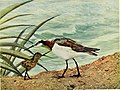 Birds and nature (1897) (20196365408).jpg