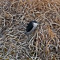 Black-crowned night heron on the grass beside the river - 1.jpg
