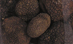 https://upload.wikimedia.org/wikipedia/commons/thumb/3/3d/Black.summer.truffle.arp_%28cropped%29.jpg/250px-Black.summer.truffle.arp_%28cropped%29.jpg