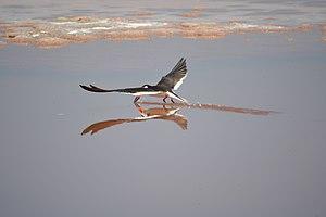 San Diego Bay National Wildlife Refuge