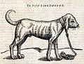 Bloodhound-Eng.jpg