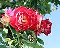 Blossom at noon.jpg