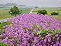 Blumen am Wegesrand - panoramio.jpg