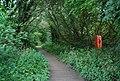 Boardwalk, University Broad, UEA - geograph.org.uk - 1389819.jpg
