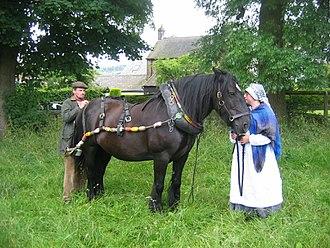 Inland Waterways Association - Boathorse Queenie (Related:Horseboating)