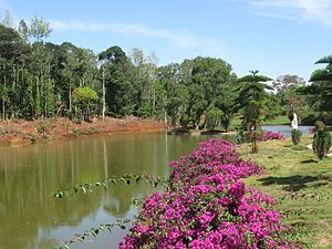 Kolli Hills - A serene pond