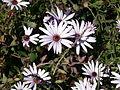 Bolsa Chica - Flora 3.jpg