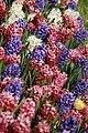 Botanic garden - Cluj-Napoca (5677425546).jpg