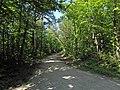 Boulevard du Nord (forêt de Montmorency) - panoramio.jpg