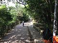 Bowen Road Fitness Trail.jpg