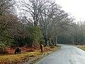Bramshaw Road - geograph.org.uk - 1713356.jpg