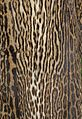 Brasilian Ocelot fur coat 3.jpg