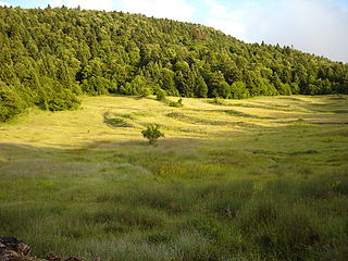 Fir of Hotovë-Dangelli National Park