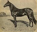 Breeder and sportsman (1890) (14770490031).jpg