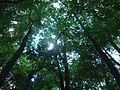 Briant Park Summit NJ June 2012 sun through trees 8.jpg