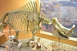 http://upload.wikimedia.org/wikipedia/commons/thumb/3/3d/Brontotherium_hatcheri.jpg/250px-Brontotherium_hatcheri.jpg