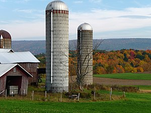 Grain silos on a dairy farm in Brunswick, New ...