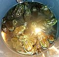 Bucket o frogs™.jpg
