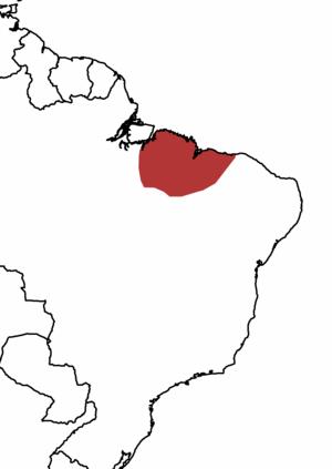 Buff-browed chachalaca - Image: Buff browed Chachalaca